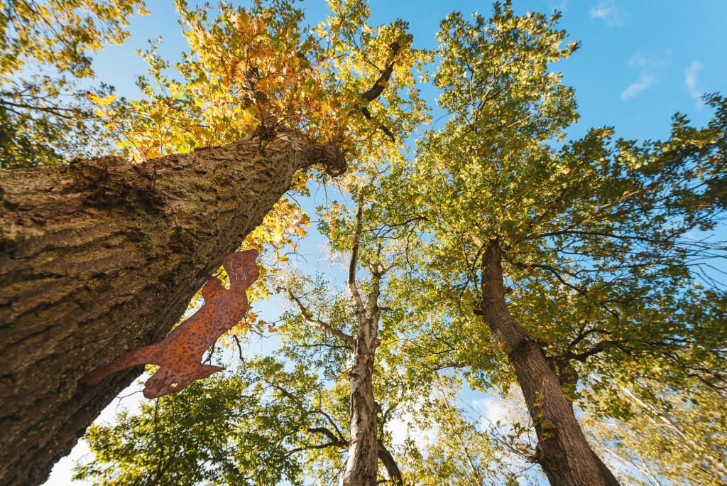 Vue contre plongée des arbres du jardin de la clinique de la femme